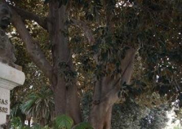 r2_jardin_floridablanca_murcia_oimg_7041_3.jpg_369272544